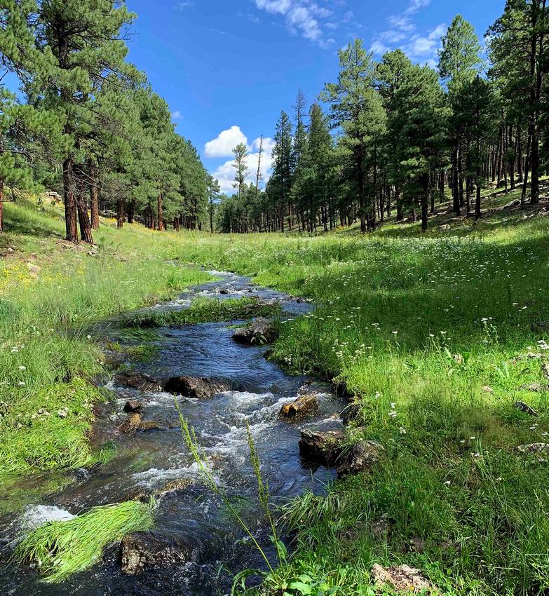 Meadow near Horse Creek