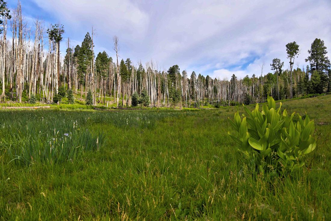 Meadow near KP Cienega Campground