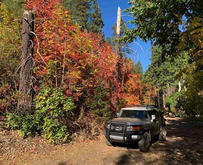 Fall color along Reynolds Creek
