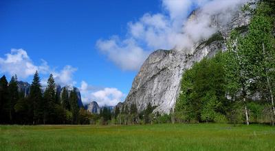 Grassy meadow in Yosemite Valley