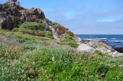 17 Mile Drive in Monterey Peninsula